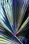 Abstract Palm Trees Prints - Abstract Palm Leaf Print by Susanne Van Hulst