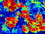 Computer Generated Flower Photos - Abstract Photography 3 by Kim Galluzzo Wozniak