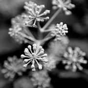 Black And White Photography Metal Prints - Abstract Plant Metal Print by Stefan Janeschitz