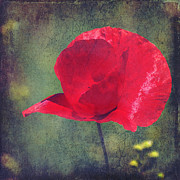 Summertime Mixed Media Prints - Abstract poppy Print by Angela Doelling AD DESIGN Photo and PhotoArt