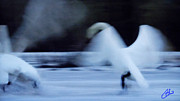 Colette Photos - Abstract Swan Dance by Colette Hera  Guggenheim