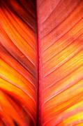Leaf Abstract Posters - Abstract Poster by Tony Cordoza