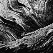 Tree Bark Posters - Abstract tree lll - black and white Poster by Hideaki Sakurai