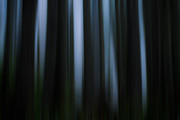 Juan De Fuca Photos - Abstract Trees and Fog by Matt Dobson