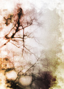 Winter Storm Metal Prints - Abstract Trees Metal Print by David Ridley