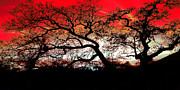 Abstract Trees Red Sky Print by Sue Holman
