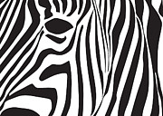 Dave Digital Art Framed Prints - Abstract Zebra Head Framed Print by Dave Gordon