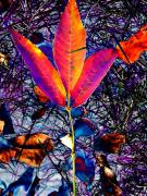 Abstracted Photo Framed Prints - Abstracted Fall Leaves Framed Print by Beth Akerman