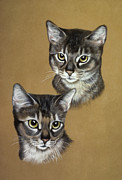 Pair Pastels Framed Prints - Abyssinian cats Framed Print by Patricia Ivy