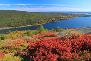 Autumn Foliage Photos - Acadia Mountain Foliage and Somes Sound by John Burk