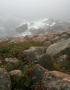 Chris Hill - Acadia National Park...