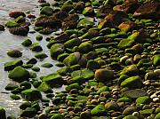 Pebbles Prints - Acadia Pebbles Print by Juergen Roth