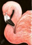 Flamingo Drawings - ACEO Flamingo by Bruce Lennon