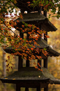 Red Maple Leaves Framed Prints - Acer Pagoda Framed Print by Mike Reid
