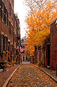 Fall Road Posters - Acorn St. Poster by Joann Vitali