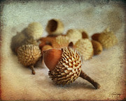 Still Life Photographs Mixed Media Posters - Acorns Poster by Batya Sagy