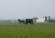 Horse And Buggy Prints - Across the Corn Field Print by David Arment