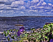 Petunia Photos - Across the River by Sandy Poore