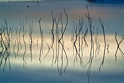 Lake Prints - Acuatic graphics Print by Guido Montanes Castillo