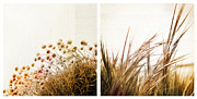 Diptych Photos - Adagio Diptych by Dorit Fuhg