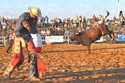Rodeo Bulls Posters - Adding injury to insult Poster by Bill Willemsen