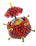 Polygon Posters - Adenovirus Structure, Artwork Poster by Ramon Andrade 3dciencia