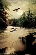 Adirondack Hawk Print by Emily Stauring