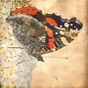Insects Mixed Media Metal Prints - Admiral  Metal Print by Angela Doelling AD DESIGN Photo and PhotoArt