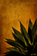 Chris Lord Metal Prints - Adobe and Agave at Sundown Metal Print by Chris Lord