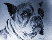 Boxer Dog Drawings Prints - Adopt Me Print by Robbi  Musser