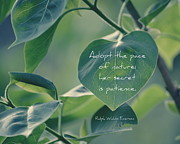 Emerson Quote Prints - Adopt the Pace of Nature Print by Marianne Beukema