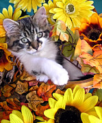 Cat Prints - Adorable Kitten with Large Eyes Chilling in a Sunflower Basket - Kitty Cat with Paws Crossed Print by Chantal PhotoPix