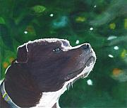 Bull Terrier Paintings - Adoration by Ally Benbrook