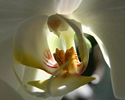 Orchids Art - Adrift  by Neal  Eslinger