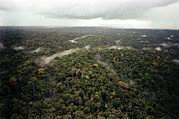 Guyana Prints - Aerial Photo Of Guyana Jungle. Fbi Print by Everett