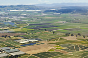 San Mateo County Prints - Aerial View of Agricultural Farmland Print by Eddy Joaquim