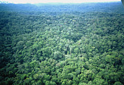 Amazonian Rainforest Prints - Aerial View Of Amazonian Rainforest, Ecuador Print by Dr Morley Read
