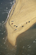 Hatteras Island Prints - Aerial View Of Cars On The Coast Print by Steve Winter