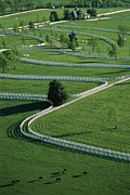 Farm Scenes Prints - Aerial View Of Donamire Farms Fenced Print by Melissa Farlow