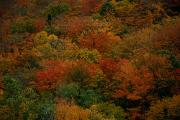 Woodland Scenes Posters - Aerial  View Of Fall Foliage Poster by Tim Laman