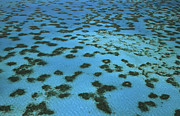 L Newman and A Flowers and Photo Researchers - Aerial View of Great Barrier Reef