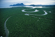 Mangrove Trees Photos - Aerial View Of The Salak River. Mount by Tim Laman