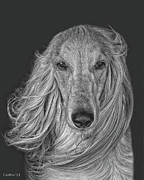 Afghan Hound Framed Prints - Afghan Hound   Framed Print by Larry Linton