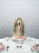 Dining Table Posters - Afghan Hound Sitting At Dinner Table Poster by Catherine Ledner