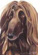 Sight Drawings - Afghan Hound Vignette by Anita Putman