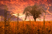 Wheat Field Sunset Print Posters - Aflame Poster by Debra and Dave Vanderlaan