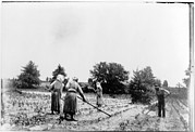Manual Labor Framed Prints - African American Farmers, Three Women Framed Print by Everett