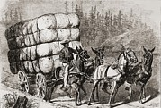 Slaves Prints - African American Teamster Transporting Print by Everett