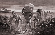 African-americans Metal Prints - African Americans Leaving A Cotton Metal Print by Everett