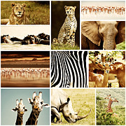 Big Bird Prints - African Animals Safari Collage  Print by Anna Omelchenko